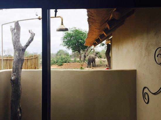 Umkumbe Safari Lodge: photo7.jpg