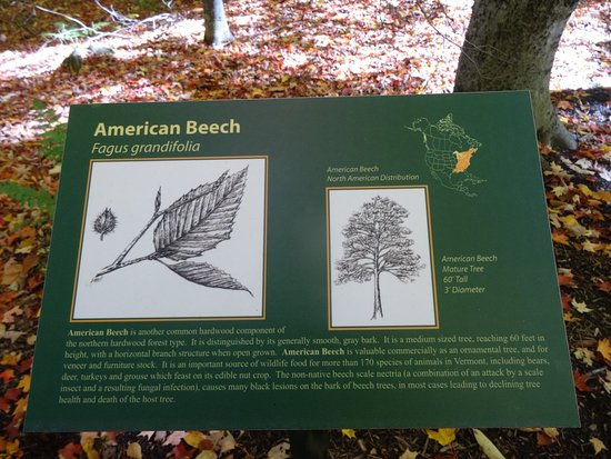 Gifford Woods State Park : Another Sign To Help Identify American Beech