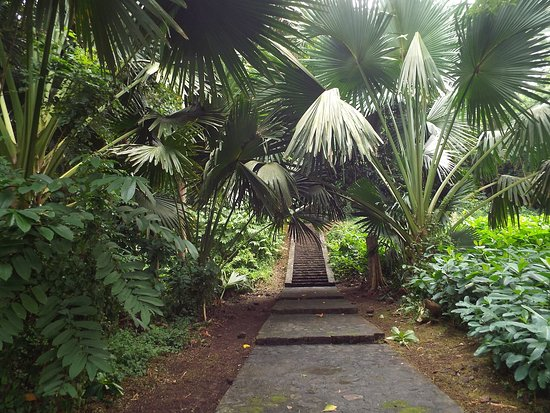 Dominica Botanic Gardens: Close to teh endangered parrots - these steps lead you to the start of Jack's Trail.