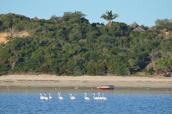 Bazaruto Island, Mozambique: photo3.jpg