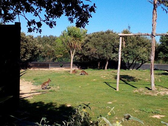 La Barben, Γαλλία: kangourou