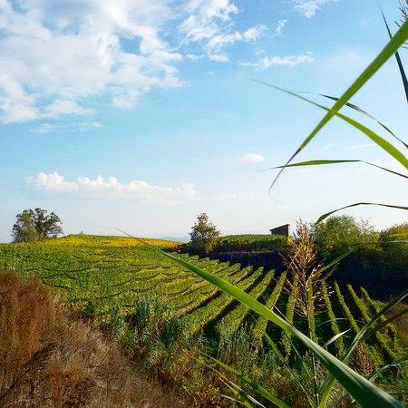 Ecomuseo delle Rocche del Roero: Panorama sul sentiero del tartufo.