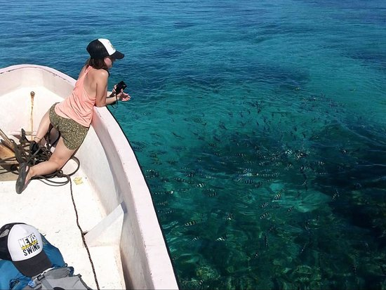 Matacawalevu Island, Fiji: Fish Feeding