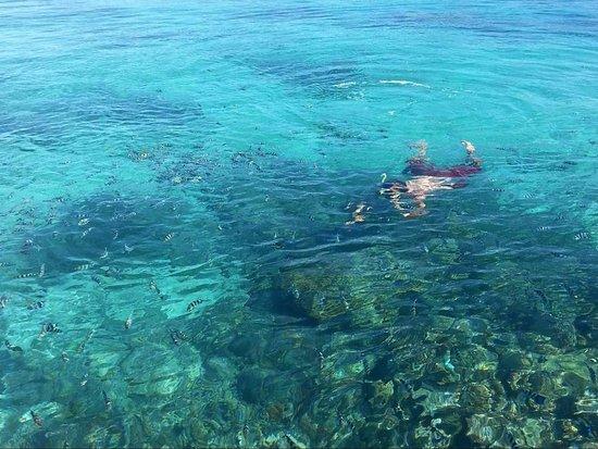 Matacawalevu Island, Fiji: Snorkelling