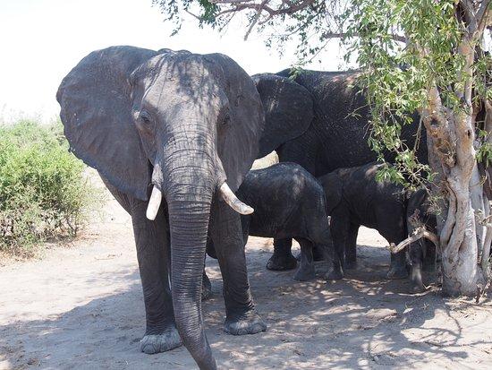 Monwana Game Lodge: First elephant sighting!
