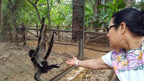Ticul, เม็กซิโก: mono araña
