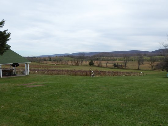 Berryville, VA: Vines