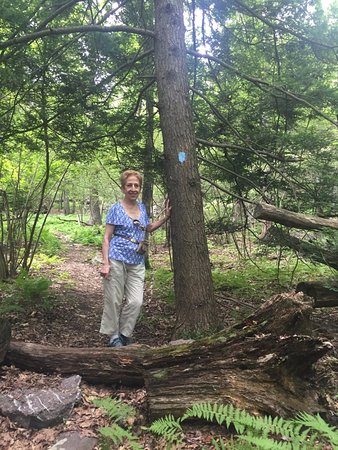 Hewitt, Nueva Jersey: The joys of hiking