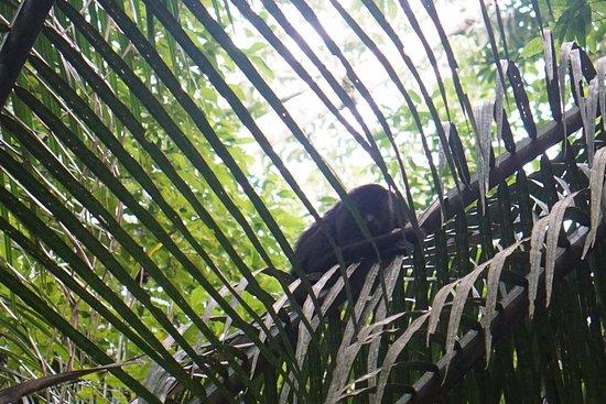 Stann Creek, Belize: Mayflower Bocawina National Park