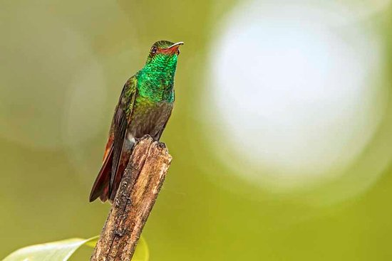 La Virgen, Costa Rica: Nice hummingbirds