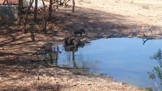 Ngala Private Game Reserve, Güney Afrika: DSC_1238_large.jpg