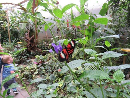 Thames, Nieuw-Zeeland: butterfly struck this young fellow.
