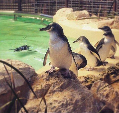 Penguin Island: photo0.jpg