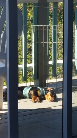 Atlantis Lodge: Puppy relaxing on the balcony. (He's tiny so we brought an ex-pen so he couldn't slip through!)