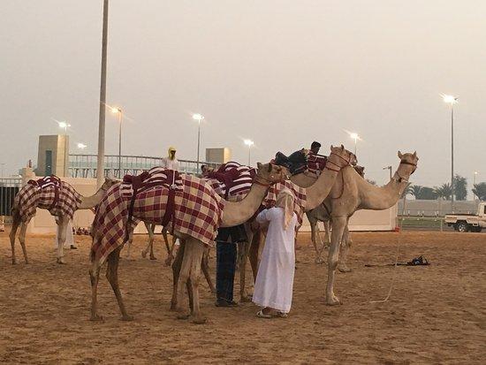 Dubai camel racing club picture of dubai camel racing club dubai dubai camel racing club thecheapjerseys Image collections