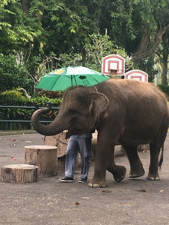 Elephant Safari Park & Lodge: photo1.jpg