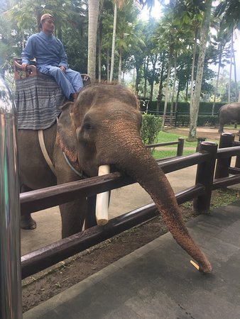 Elephant Safari Park & Lodge: photo2.jpg