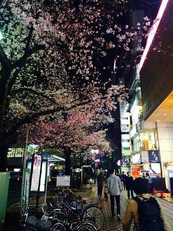Kunitachi, ญี่ปุ่น: photo2.jpg