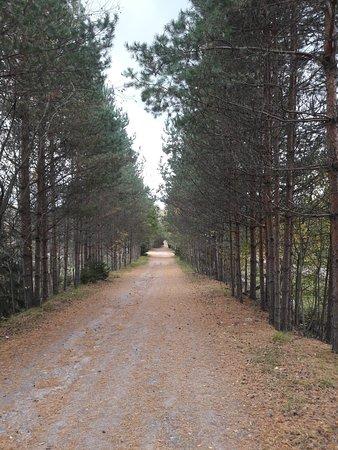 Bilde fra Leningrad Oblast