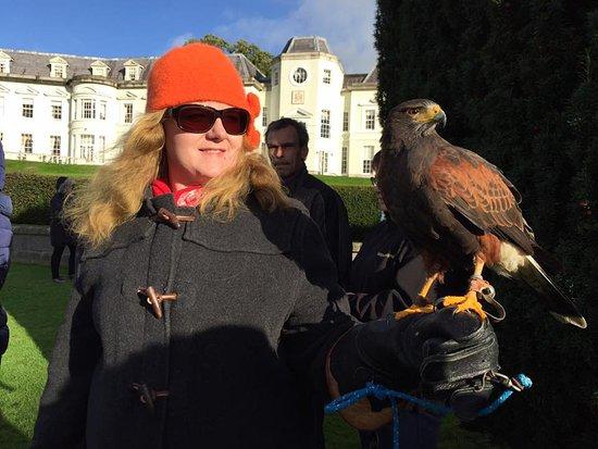 Julianstown, Ireland: Hawk