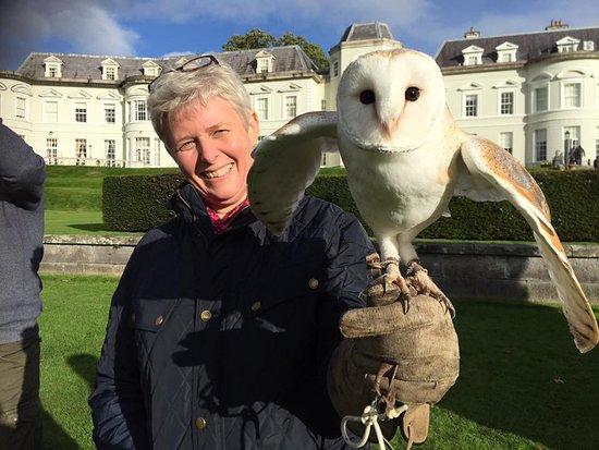 Julianstown, Ireland: Owl