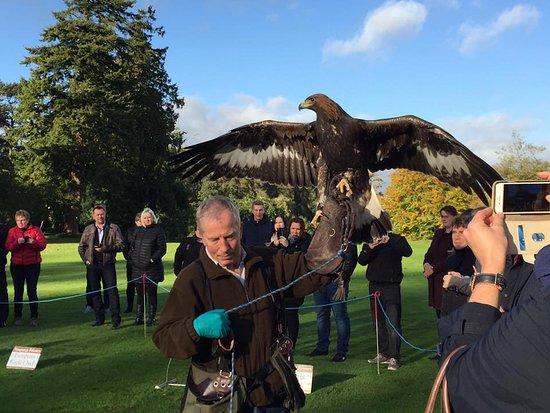 Julianstown, Ireland: Brian Mc Cann with eagle