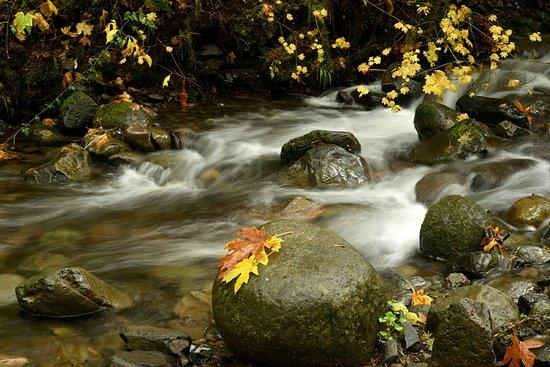 Cascade Locks, OR: Amazing photography!