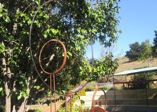 San Luis Obispo Botanical Garden: Botanical Garden, San Luis Obispo, Ca