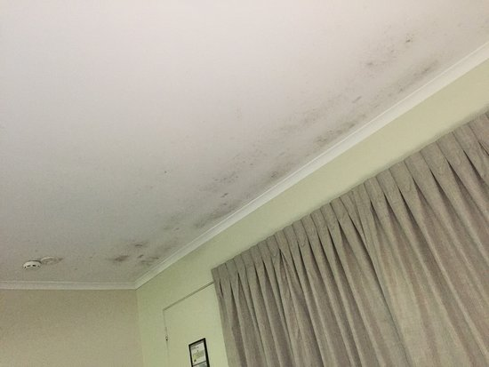 Urangan, Australia: Dirty and buggy lightbox and kitchen counter; moldy ceiling