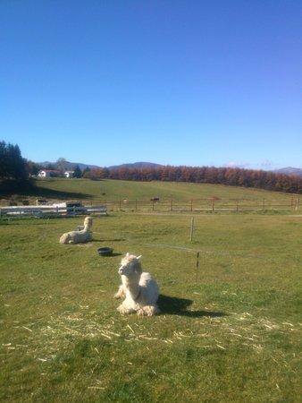 Nagawa-machi, Japan: Alpaca is waiting for you !