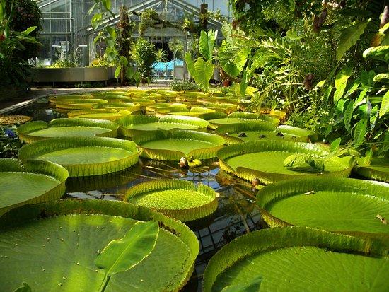 Botanical Garden, Bonn