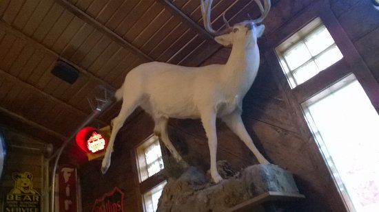 Alma, WI: the mystical white deer of WI