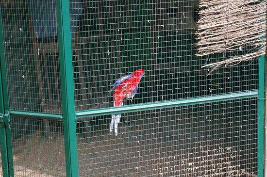 Saint-Martin-le-Vieil, Frankrijk: la volière aux perroquets