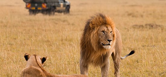 Incredible Kenya Adventures Tours & Safaris