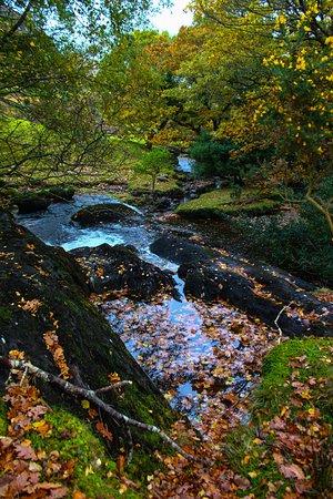 Kenmare, Irlanda: Lovely stream