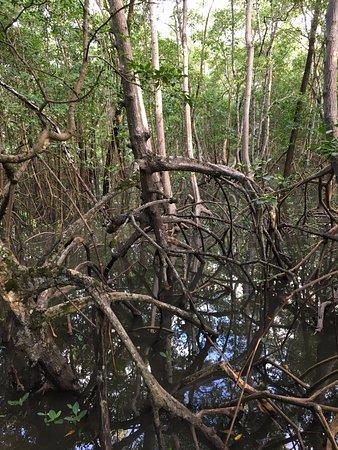 Hotel Transamerica Ilha de Comandatuba: Vista do mangue