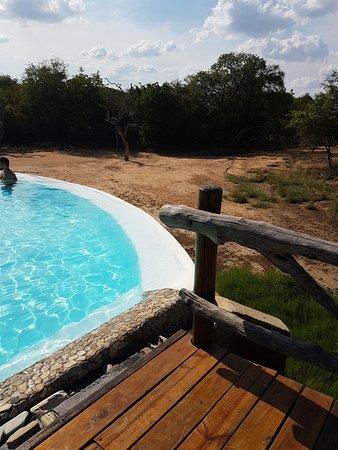 Kapama River Lodge Photo