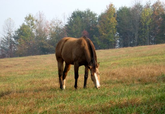 "Landrum, SC: ""Secret"" - great granddaughter of Secretariat - Innkeeper's horse."