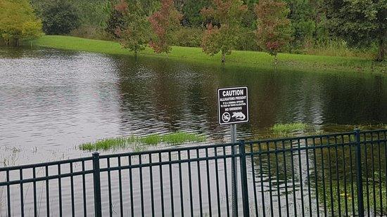 Caribe Cove Resort Orlando: Uma das lagoas do hotel.