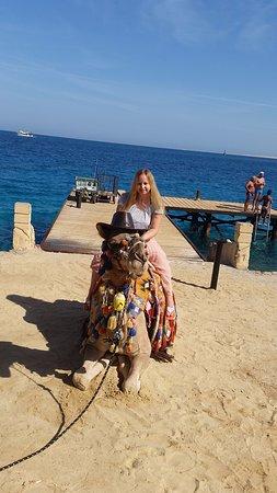 Sphinx Aqua Park Beach Resort Resort: Friendly camel Max :)