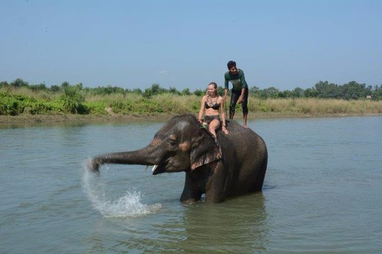Elephant at the Chitwan National Park