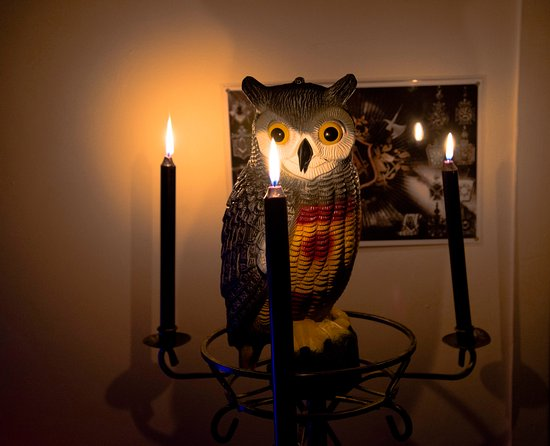Athlone, Irlandia: Owl knows more !