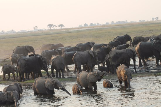 Ngoma Safari Lodge: Elephants in Chobe National Park