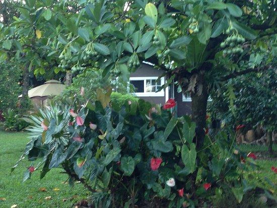 Haiku, Hawaje: Studio cottage.