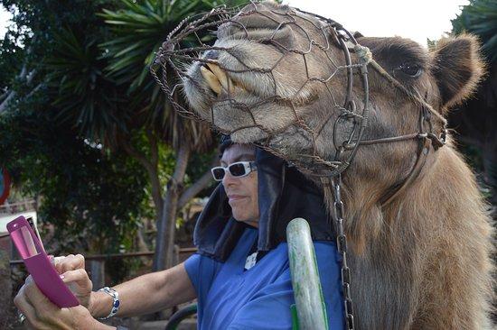 El Tanque, Spagna: El camello quería salir a mi lado