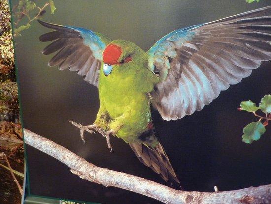 Queenstown, Nowa Zelandia: Kiwi Birdlife Park