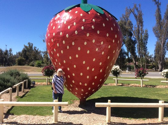 how to grow big strawberries in australia