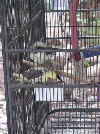 Altamont Court Hotel Kingston: Tropical birds