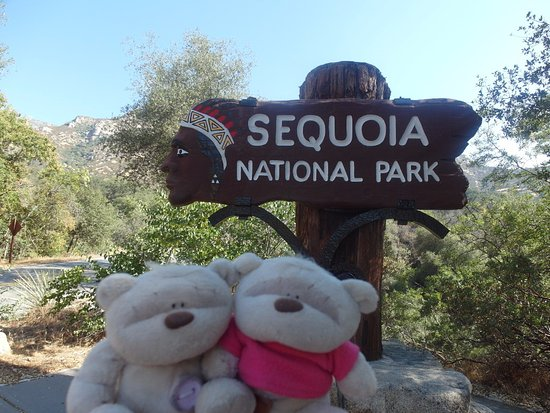 Three Rivers, CA: 2bearbear @ Sequoia National Park