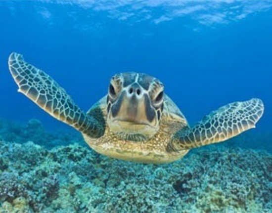 Photo4 Jpg Picture Of Ningaloo Reef Ningaloo Tripadvisor